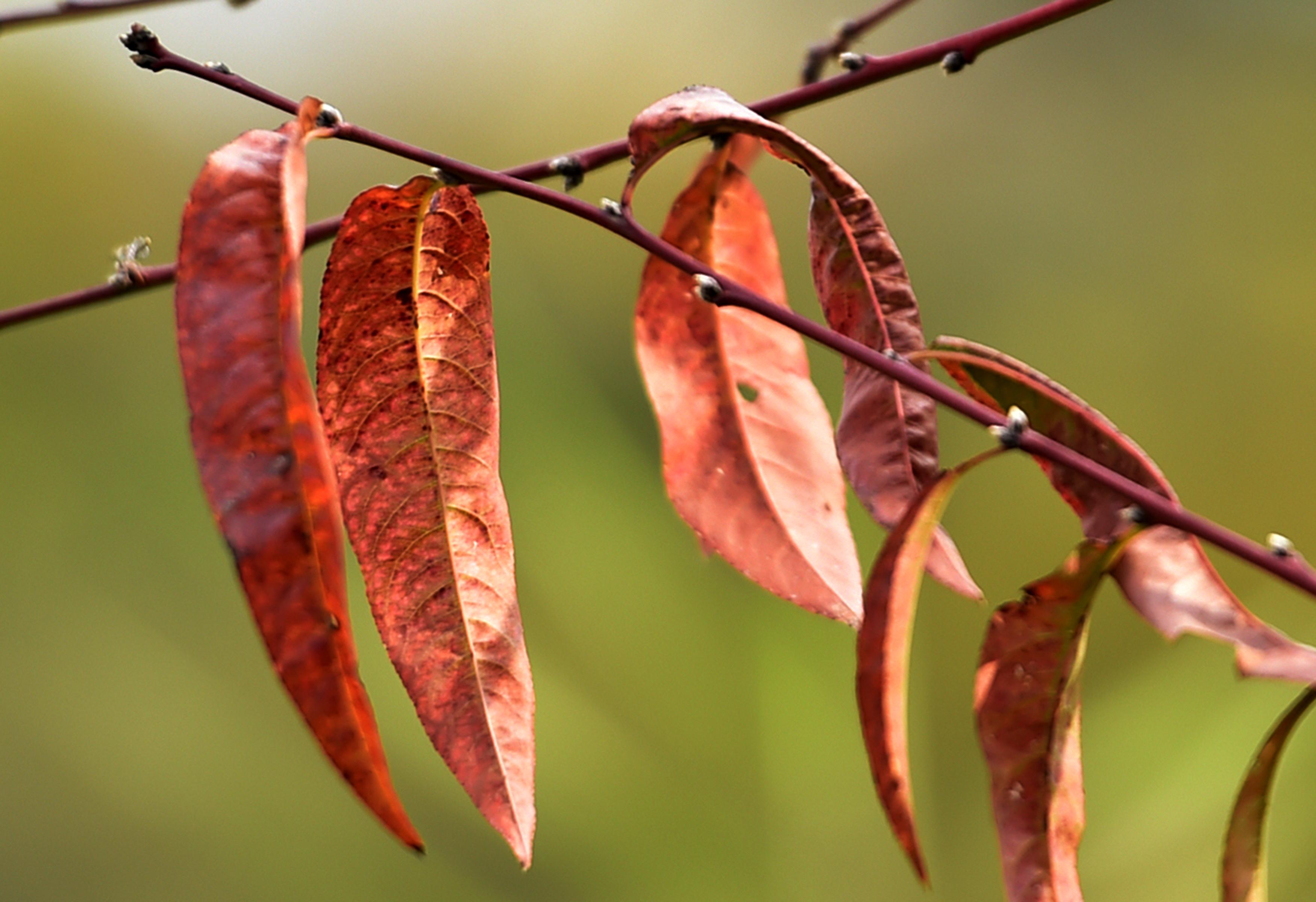 图集丨扬州:感受一叶知秋的魅力